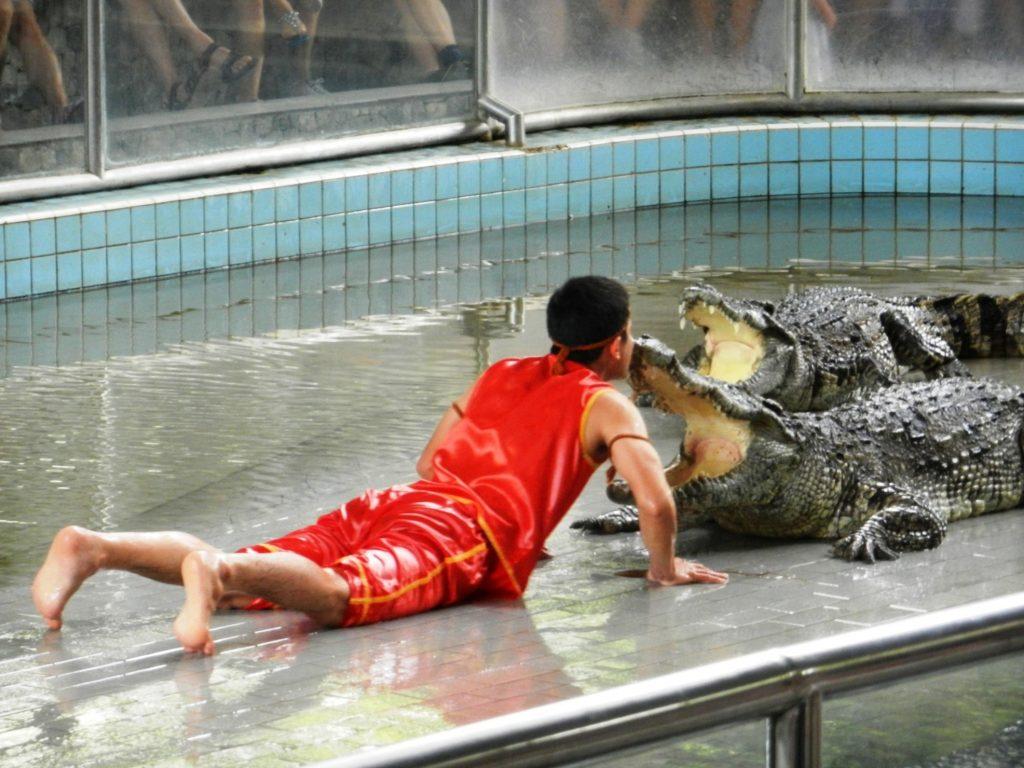 Экскурсия на крокодиловую ферму. Дрессировщик и его подопечные.