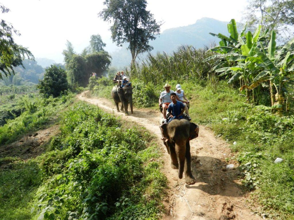 Российские туристы путешествуют по джунглям на слонах