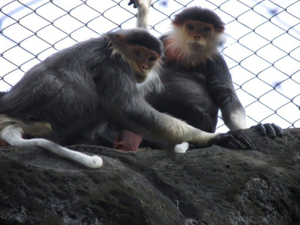 Обитающие в зоопарке обезьяны очень любят фотографироваться