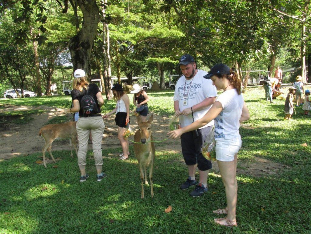 Руссо-туристо кормят оленей