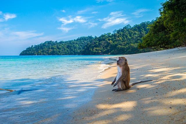Какое море в Таиланде: океан или море омывают страну?